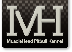 Musclehead Pitbull Kennel | Home